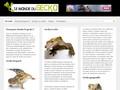 Tout sur les geckos