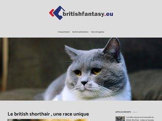Mieux découvrir le British Shorthair
