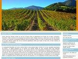 Des vacances authentiques grâce à la visite d'un domaine viticole